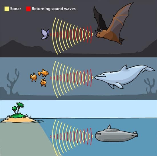 Types of Echolocation